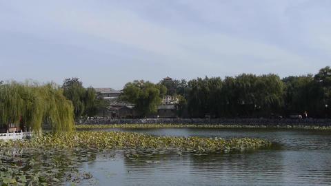 Vast lotus leaf pool in autumn beijing & ancient... Stock Video Footage