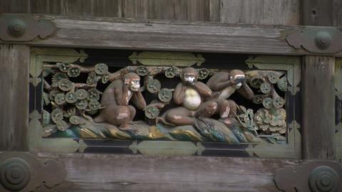 Three monkeys zoomout Stock Video Footage