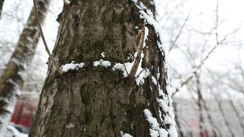winter tree 01 Stock Video Footage