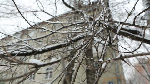 winter tree 03 Footage