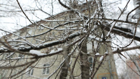 winter tree 03 Stock Video Footage