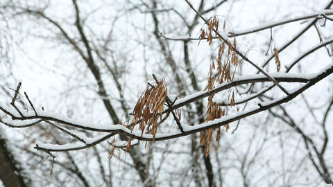 winter tree 05 Stock Video Footage