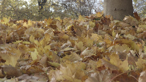 Autumn leaves on ground under the tree zoom in Footage