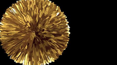 Golden Pompon - Transition - Alpha