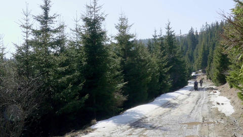 Tourists who go on a road through the pine forest above which was littered snow  Footage