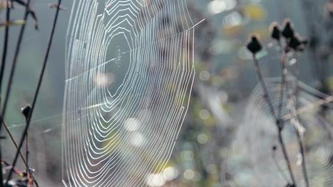 Cobwebs In Light Wind