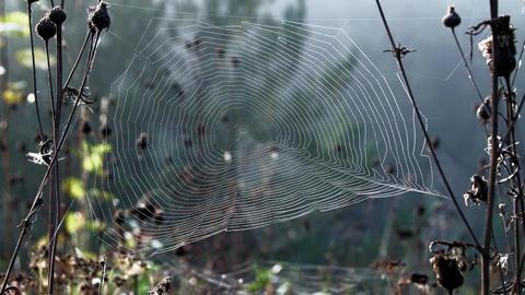 Cobwebs In Light Wind 0