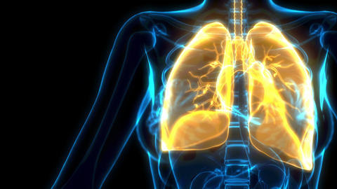 yellow human lungs on xray image, cg healthcare 3D animation Animation