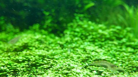 4K Shrimp in Aquarium ビデオ