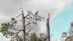 Tornado damage trees snapped Footage
