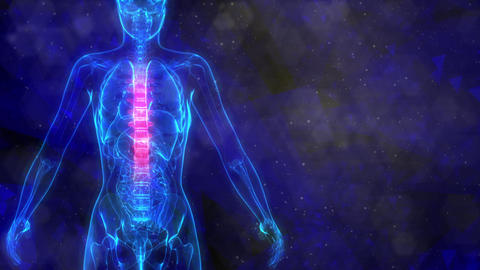 Thoracic, middle part of human spine on x-ray body - human body Animation