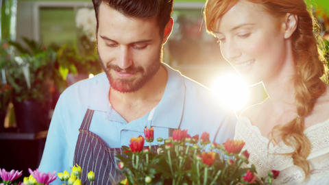 Close-up of florists checking flower Footage
