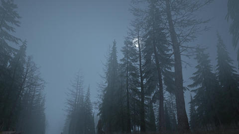 Looped animation of flying through a scary forest with moon Animation