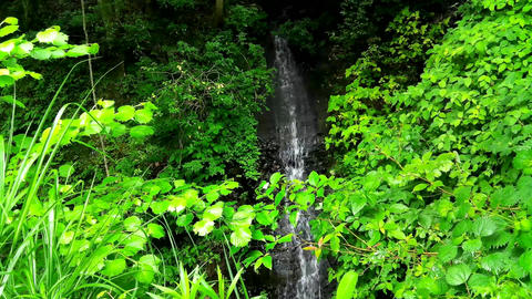 A small waterfall in the Japanese countryside in summer Live Action