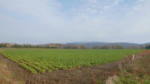 Mt. Sharidake and Field,in Shiretoko,Hokkaido,Japan,Filmed in 4K Footage