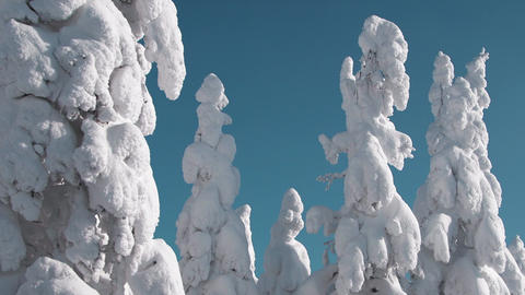 Snow In Winter Forest 0