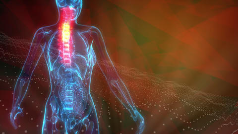 cg medical 3D animation, Cervical, top part of spine on x ray body Animation