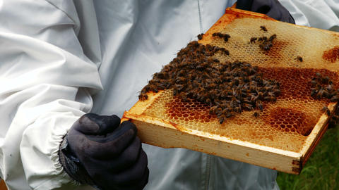 Beekeepers holding and examining beehive Footage