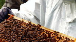 Beekeeper holding and examining beehive Footage