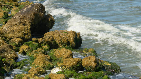 Waves Crashing Against Rocks with Algae, 4K Footage