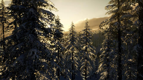 Majestic Winter Landscape Glowing by Sunlight Live Action