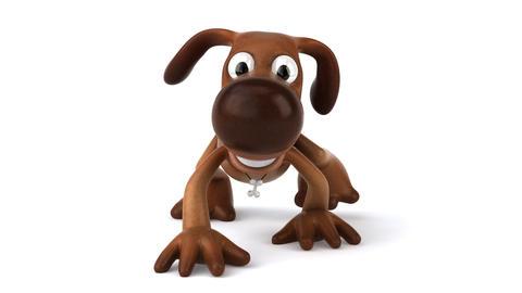 dog walk2 HD Stock Video Footage