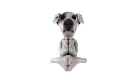 dog zen Stock Video Footage
