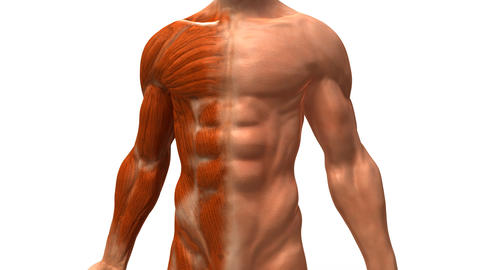 muscles1 Stock Video Footage