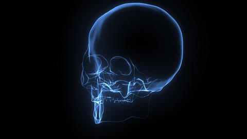 X-Ray Skull Stock Video Footage