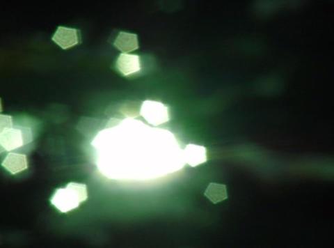 Lotus Leaves 06 Loop Stock Video Footage