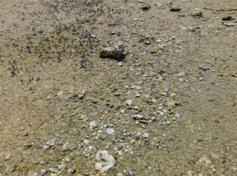 Mono Lake HS 5 Loop Stock Video Footage