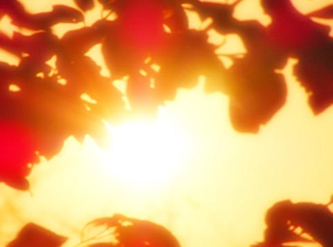 Sunset Leaves 01 Loop Footage