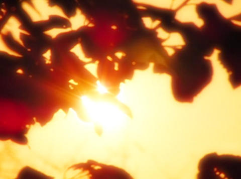 Sunset Leaves 01 Loop Stock Video Footage