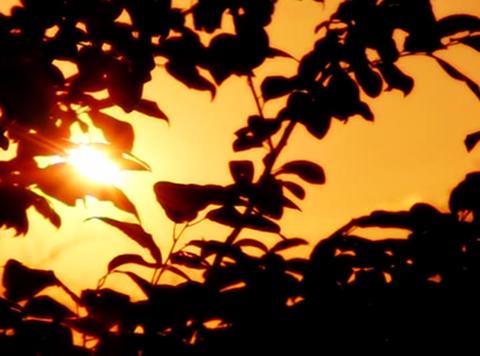 Sunset Leaves 05 Loop Stock Video Footage