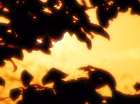 Sunset Leaves 07 Loop Stock Video Footage