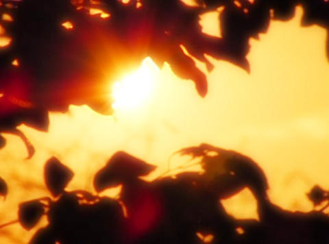 Sunset Leaves 07 Loop Footage