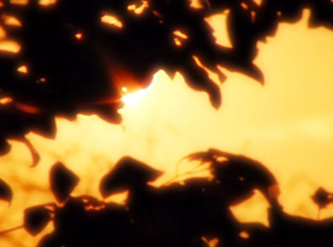 Sunset Leaves 07 Loop Stock Video Footage