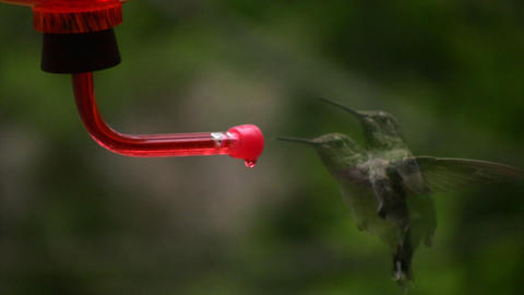 Hummingbird 9 Slow motion 10per Stock Video Footage