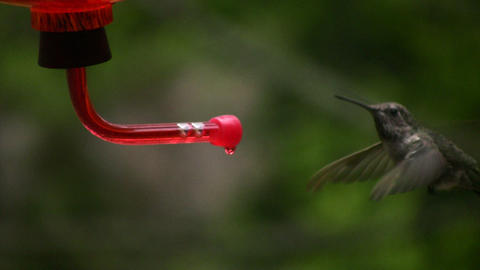 Hummingbird 9 Slow motion 10per Footage