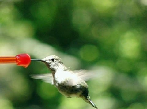 Bye humming bird Stock Video Footage