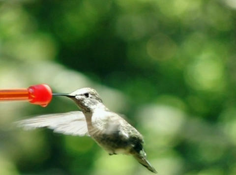 Bye humming bird Footage
