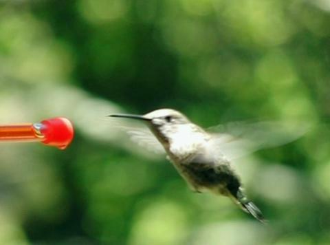 Bye humming bird Stock Video Footage