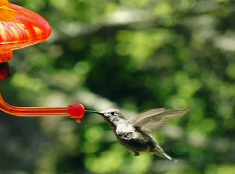 Here goes the humming bird Stock Video Footage