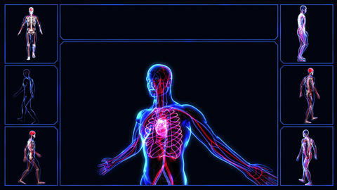 Circulatory System stock footage