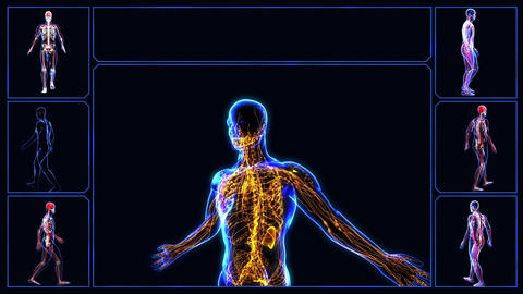 Lymphatic System Animation