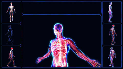 Human body Animation