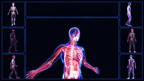 Human body Stock Video Footage