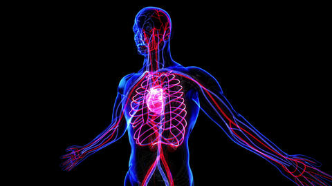 Circulatory System Stock Video Footage
