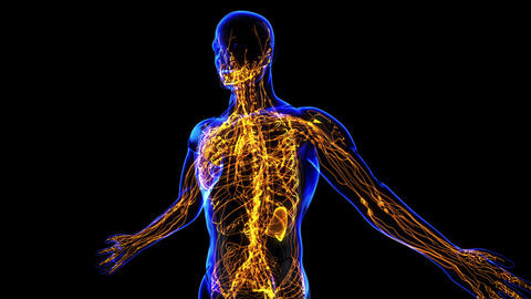 Lymphatic System stock footage