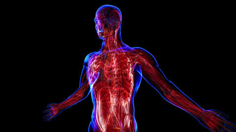 Muscular System stock footage